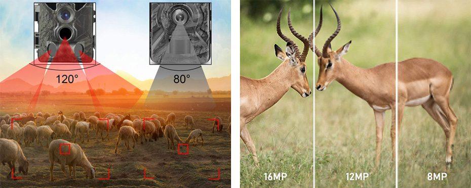 comparativa de los angulos de deteccion y la resolucion de las fotografias en camaras de vigilancia para cazadores