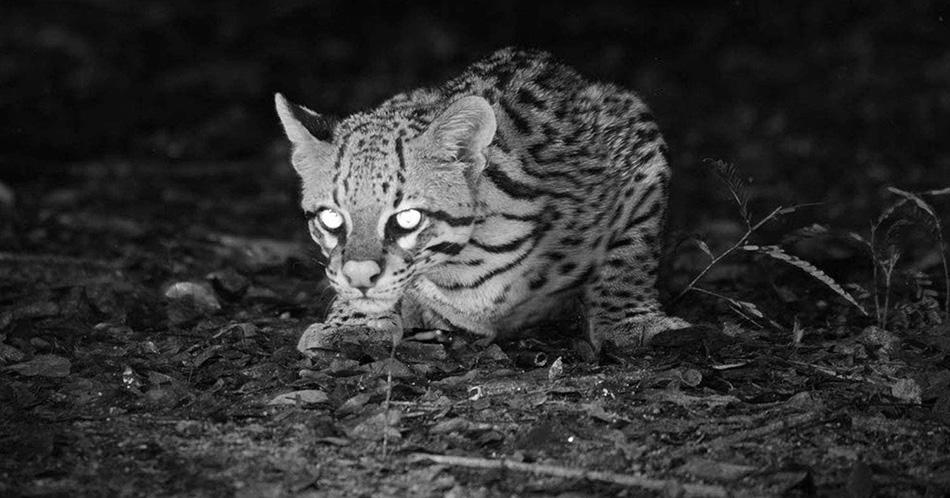 con un visor nocturno podemos ver todo tipo de animales en la oscuridad