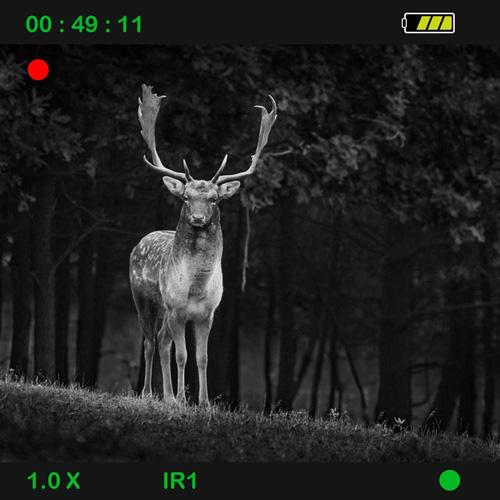 animal visto visto con monocular de noche