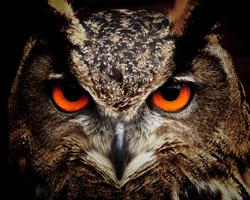 Los buhos son animales nocturnos y poseen una potente vision nocturna que les permite ver en la noche