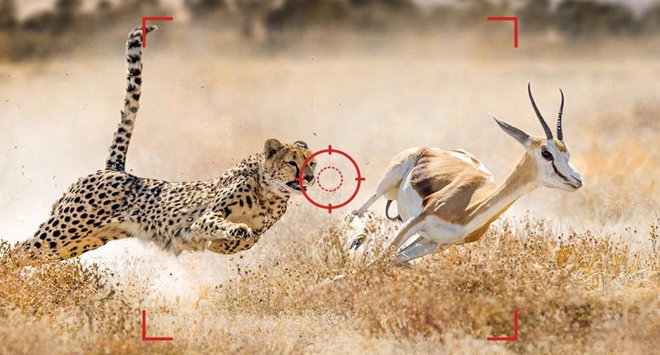 velocidad de captura rapida en las camaras de vigilancia para cazadores